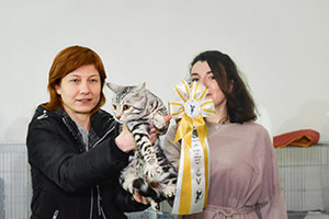 2018.03.18-Golden Cat V