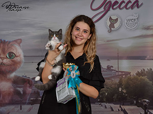 2018.09.16-BEST-BOS Kitten-Neuter